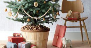 живая елка в горшке на новый год