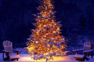встретить новый год в лесу у костра